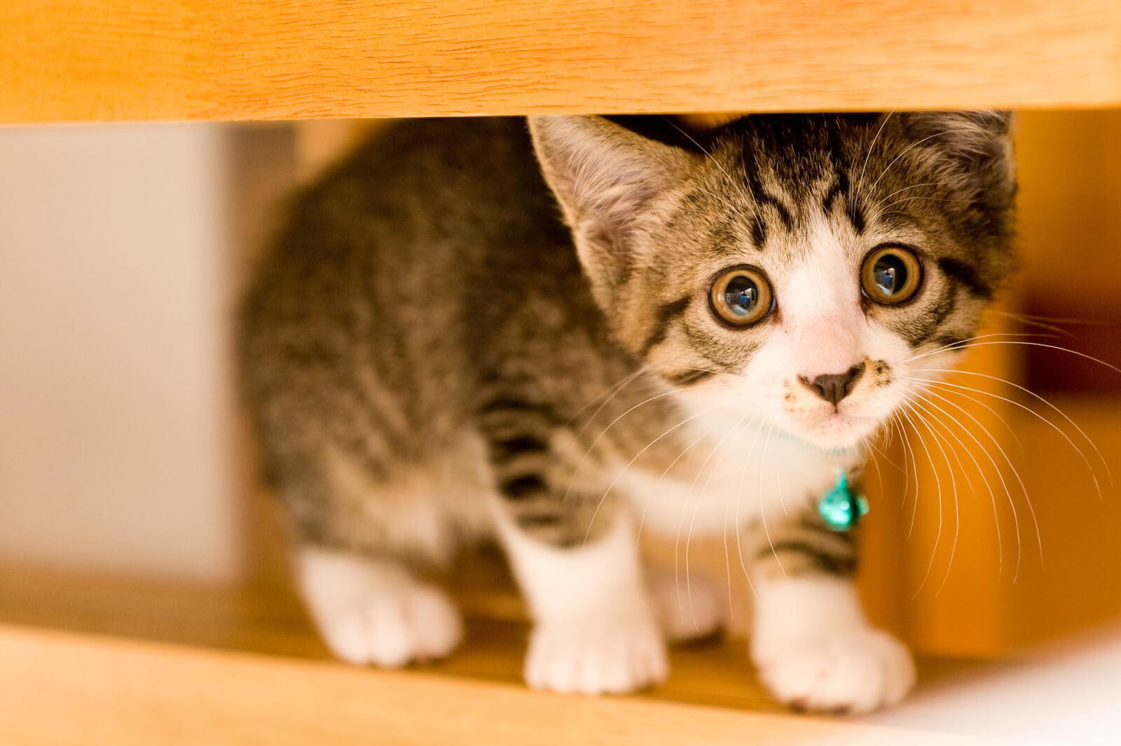 日産:猫バンバンプロジェクト良いアイデアですね!