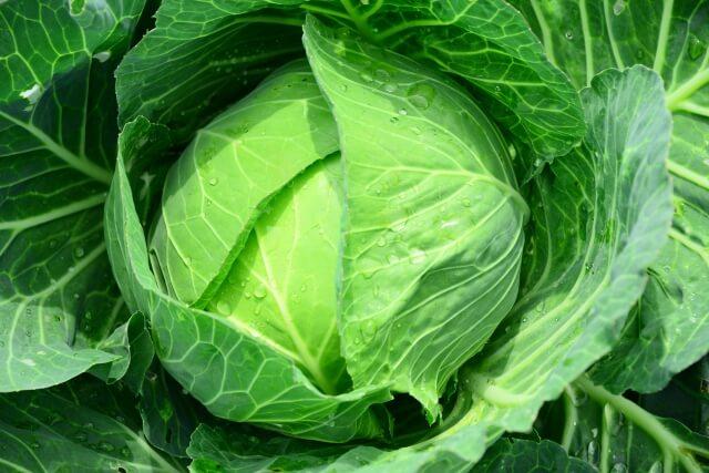 食卓に大打撃!野菜の高騰いつまで続くのか?