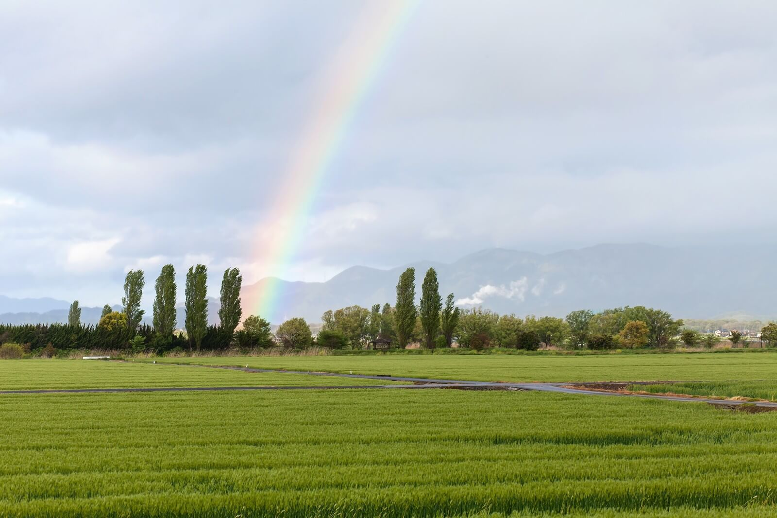 今から晴れるよ!「白虹」が現れる:見たことあるかな?