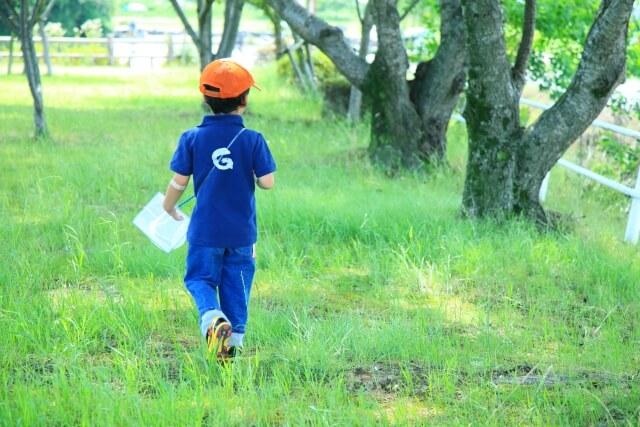 【赤いクワガタ要注意!】大津市でも発見ヒラズゲンセイ生息範囲が拡大中!